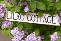 Lilac Cottage on Lavender Lane / by Denise Opperman