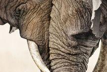 Animal communication / Everything around animal communication