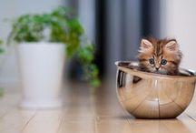 O gato mais fofo do mundo