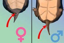 Țestoase  ❤❤