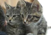 Pet Adoption by Socialtap
