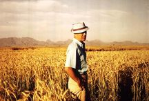 Agronomists and Agricultural Scientists / by Bioenergy Crops