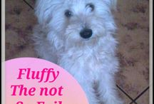 Life and Dog Stuff Blog - Buffy and Fluffy / dog blog, humorous dogs, funny dogs, dog help, advice for dogs, advice about dogs, blog, puppy, dog training, pets, funny dog stories, humor, dog stuff.