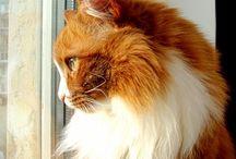 Katten