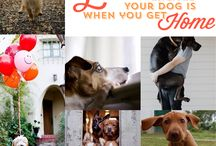 Why We Love Dogs / What's not to love about dogs?  They bring us so much joy, and well, they're just so stinkin' cute.