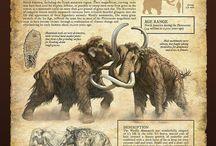 Животные АРТ