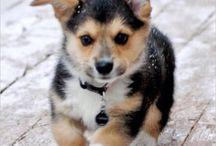 babies / Puppies