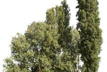 Деревья д фш