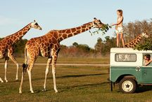 Land Rover and Animals / Land Rovers and Animals