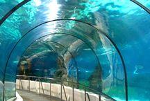 Barcellona, l' Acquario  / Ecco un'altra tra le più famose attrazioni di Barcellona, l' Acquario.