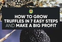 Truffles/growng vegies