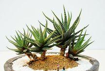 Jardineria - Plantas pequeñas / plantas para interiores... materas, macetas