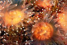 Underwater Paradise / The Salty Garden of Eden