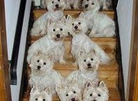 Westies / by Eve Campbell