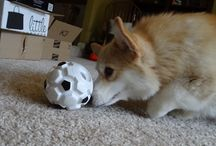 puppy enrichment ideas