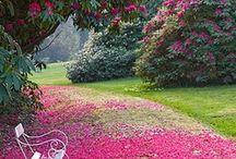 Il mio giardino / Giardino dei sogni