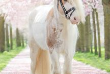 lenyűgözö lovak