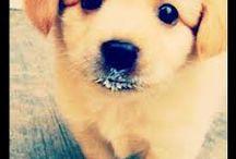 #instagram #mydoggie