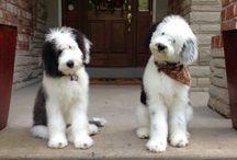 Puppies & doggies ❤