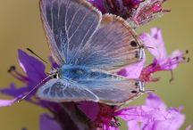 Butterflies / by Jennifer Hill
