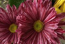 Květinky Flowers