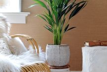 &KENTIA PALM / See how to use the Kentia Palm in your home...