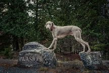 Pet photography / Photos of Sparkle, Ken Lee and all other great animals that come our way!