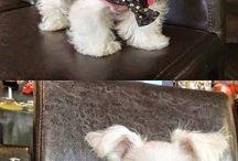 Lovestory Puppy