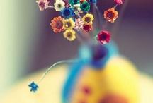 daisy  / by İlky ^_^
