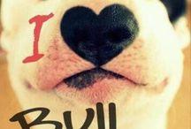 Bill terriers