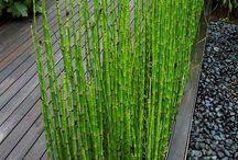 Plants for outside