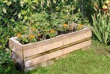 Garden plans!!!