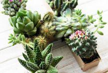 Plantas & terrarios