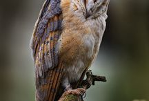 Owls Always Love You / Obssessed with how cute owls are.  Wish there were more of them.  Never see them anymore.