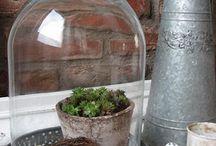 Cloches & Apothecary Jar Ideas