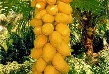Árboles tropicales