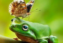 Žabka fotky