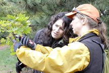"""""""Branching Out In the South: Pruning Small Trees and Shrubs In the Japanese Tradition"""" / NAJGA's 2015 North Carolina regional event - October 22 - 23, 2015"""