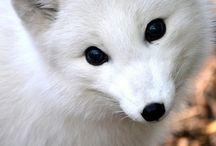 It´s so cute