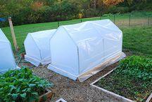 My future garden / by Patti Griffin