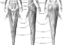 Worldbuilding: Anatomy and Physiology / Resources for worldbuilding creatures and races.