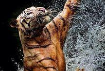 Wild Cats....