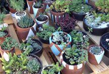 Terrazas | Jardín | Paisaje