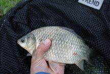 vissen / vissen algemeen