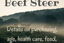 Cow's & Beef Farming