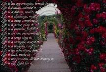 Your Daily Doze of Wisdom