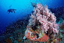 Deep Blue Sea Diving Paradise!