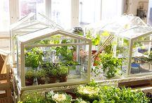 Balkon, mały ogród (insp.)