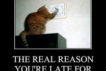 Reasons cats are evil