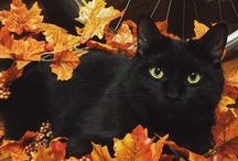 Cats in Autumn / Photos, blog posts, and more about cats during the fall season.